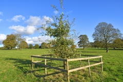 The Bob Macey Commemorative English Oak