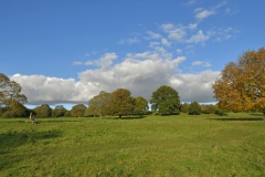 The Common Plot Mount Road Meadow in Autumn