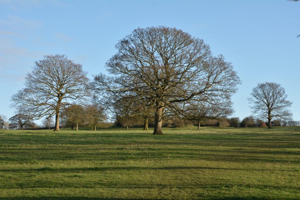 Winter Trees Mount Road Meadow