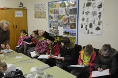Brownies in the Education Classroom