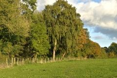 Perimeter of the Hay Meadow
