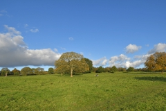 The Common Plot Mount Road Meadow in Autumn 2