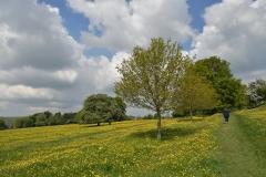 The Oak Avenue Mount Road Meadow
